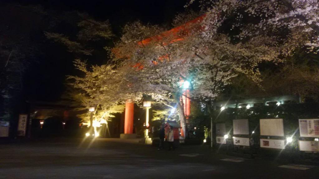 冠稲荷神社夜桜